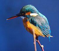 2月9日(日) 野鳥観察会をします。